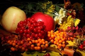 La concentration en vitamine C de l'argousier est 30 fois supérieure à celle de l'orange